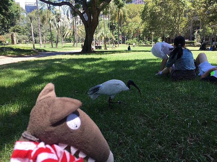 loup est en australie      u2013 ecole nazareth